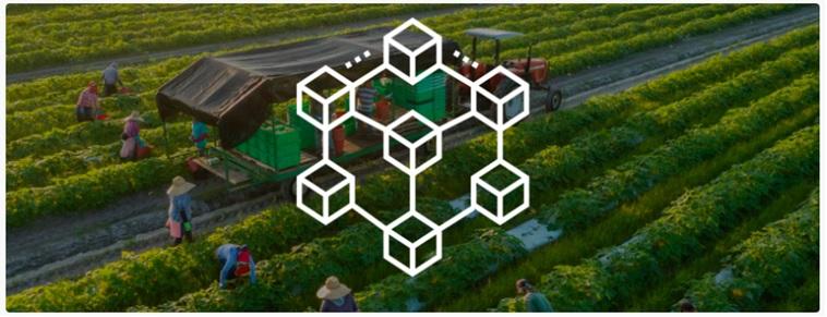Blockchain, una nueva herramienta para garantizar la trazabilidad.