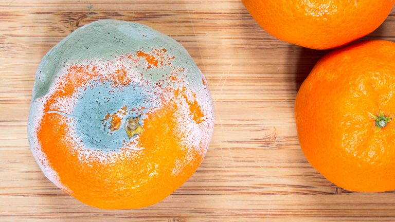 Deterioro de alimentos: Microorganismos responsables y alimentos afectados.