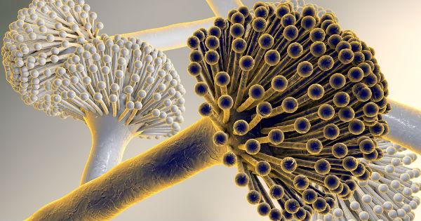 Aflatoxinas: ¿Qué son? ¿Cómo puedo analizarlas?