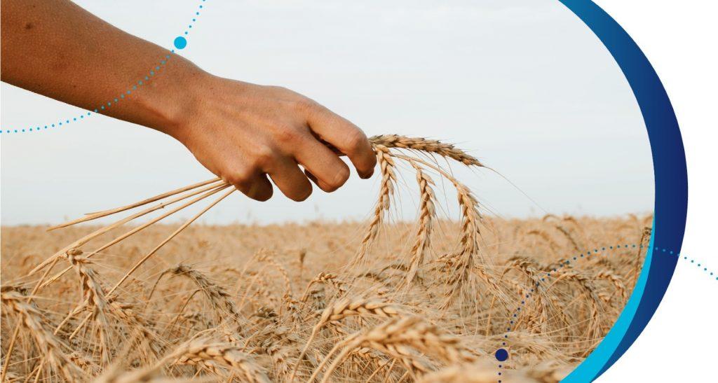 Kits AgraStrip PRO WATEX