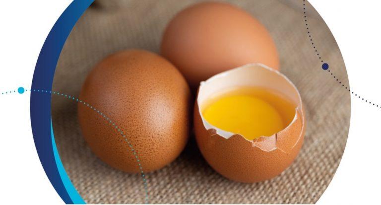 control y detección salmonella industria alimentaria